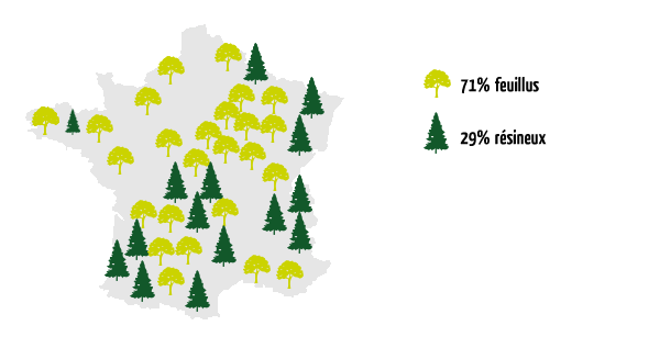 Forêt francaise constitution